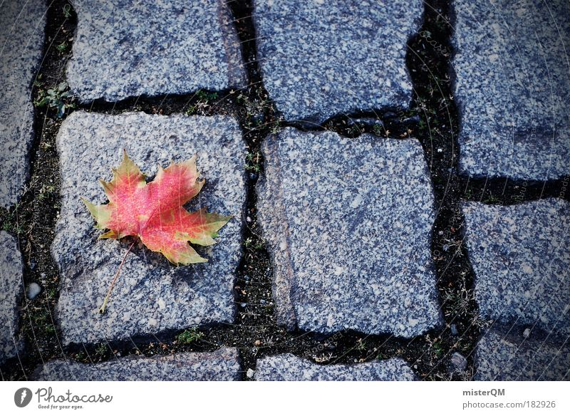Human being Nature Red Leaf Loneliness Winter Calm Street Life Autumn Contentment Esthetic Ground End Seasons Cobblestones