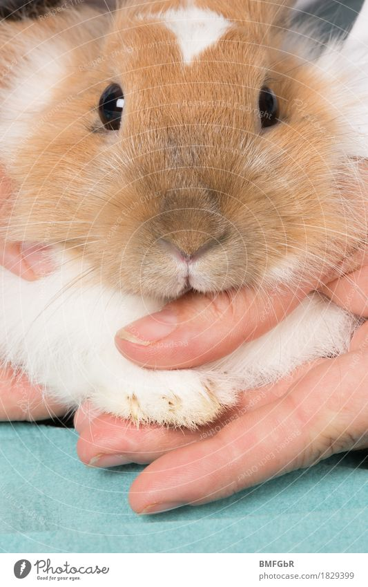 Manicure for the bunny Personal hygiene Healthy Well-being Leisure and hobbies Veterinarian Animal Pet Animal face Pelt Claw Paw Hare & Rabbit & Bunny