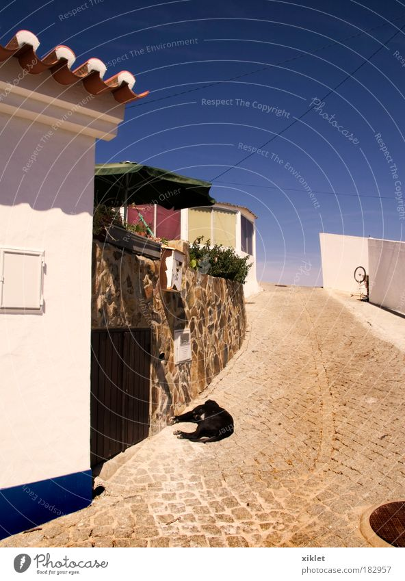 a street Blue Beautiful Dog Summer Animal Calm House (Residential Structure) Street Environment Building Village Serene Beautiful weather Alley Blue sky