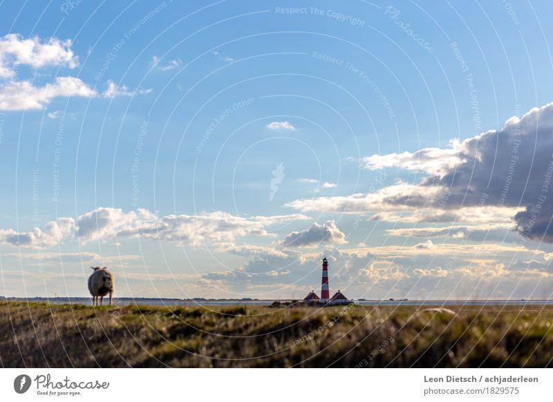 """""""I wonder if I can go to the lighthouse too."""" ... Landscape Sky Clouds Sunlight Spring Beautiful weather Grass Bushes Hill Coast North Sea Tower Lighthouse"""