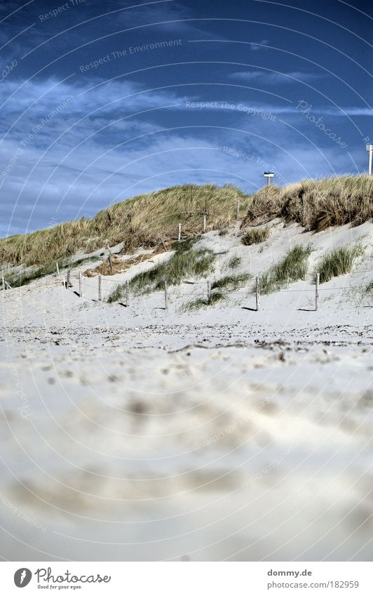 op de duinen Colour photo Exterior shot Deserted Day Shadow Contrast Deep depth of field Worm's-eye view Tourism Far-off places Freedom Summer Summer vacation