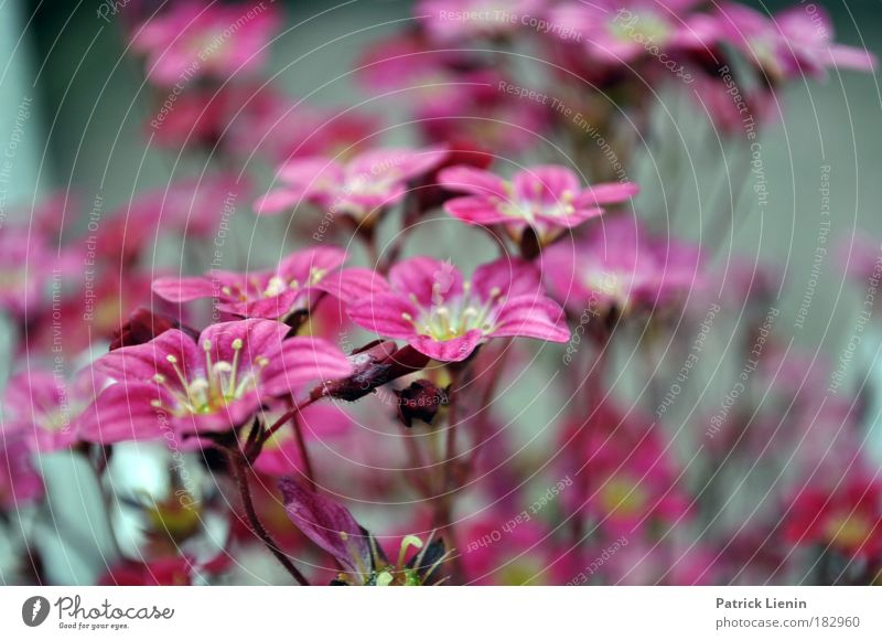 Nature Beautiful Flower Plant Meadow Blossom Spring Park Landscape Pink Romance Soft Stalk Exotic Macro (Extreme close-up) Stamen