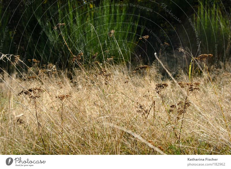 uncontrolled growth Nature Landscape Plant Autumn Grass Bushes Wild plant Meadow Brown Green Field Hay Colour photo Exterior shot Deserted Day