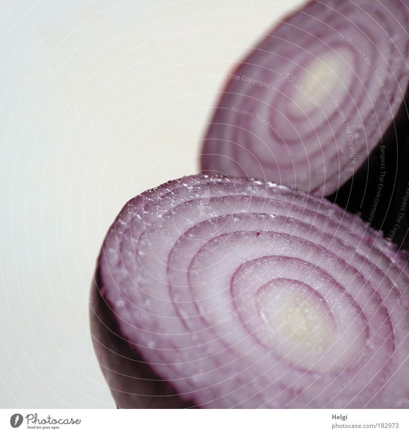 Close-up of a red sliced onion against a white background Colour photo Subdued colour Interior shot Detail Deserted Copy Space left Copy Space top