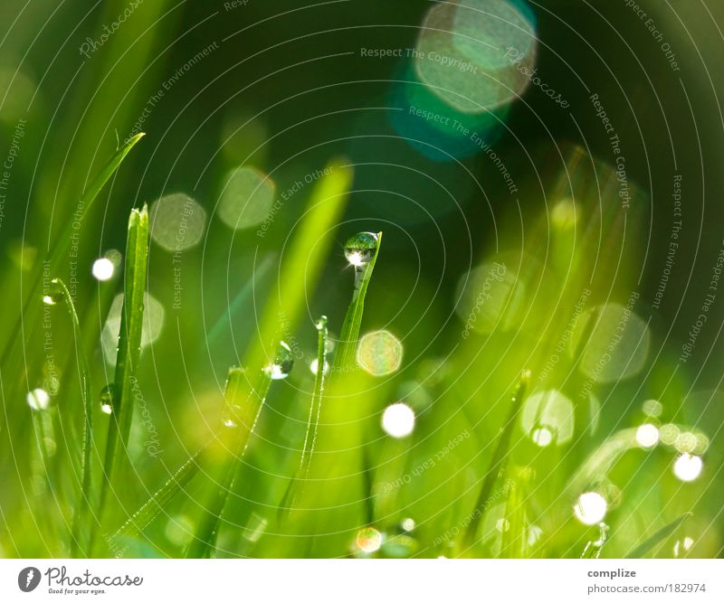 Nature Environment Plant Green Summer Sun Relaxation Leaf Spring Meadow Grass Macro (Extreme close-up) Park Dream Bushes Water