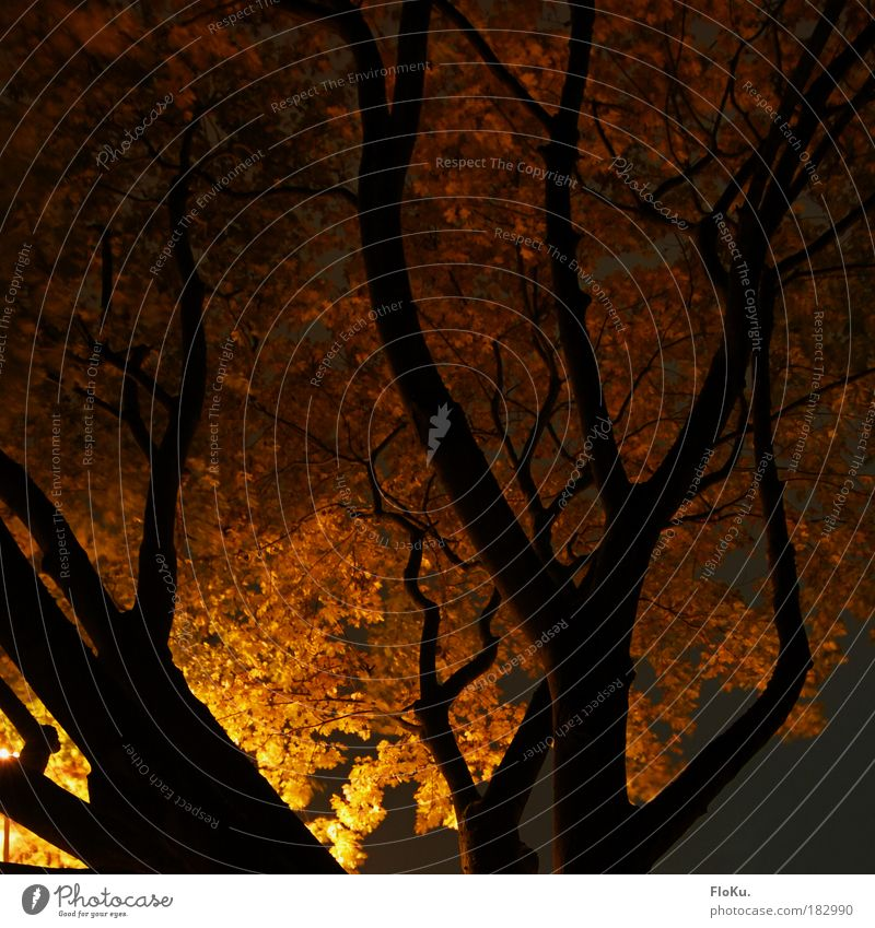 park walk Colour photo Exterior shot Deserted Night Artificial light Light Shadow Contrast Silhouette Long exposure Environment Nature Plant Autumn Tree Park