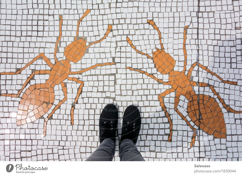 PANIC! Handcrafts Mosaic Human being Legs Feet 1 Footwear Animal Ant 2 Stand Gigantic Large Creepy Fear Dangerous Stress Creativity Brave Colour photo