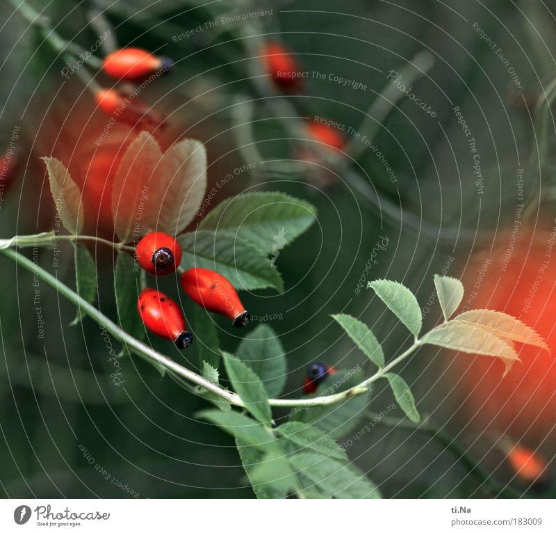 Nature Flower Green Plant Red Summer Winter Leaf Animal Autumn Grass Landscape Glittering Environment Rose Growth