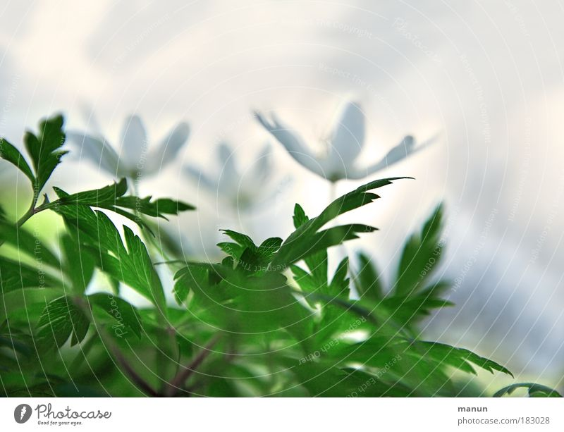 Nature White Green Plant Flower Calm Relaxation Spring Bright Park Exceptional Design Happiness Abstract Creativity Fragrance