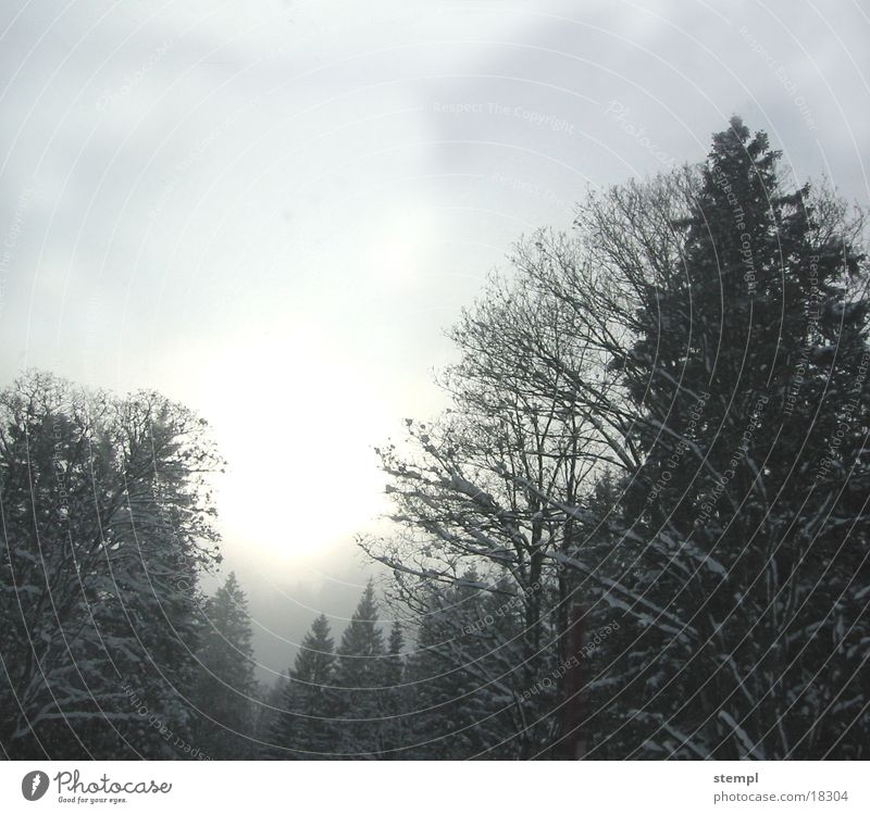 Tannheimer Winter Nebula Fog Tree Forest snow. winter tannheim