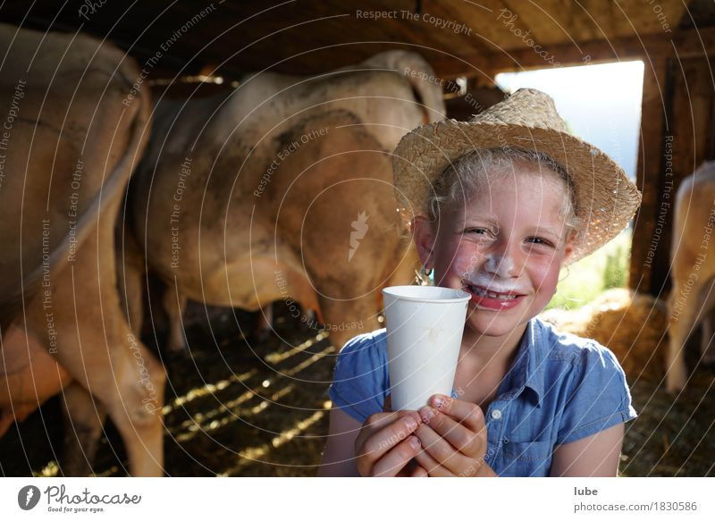 fresh milk Food Beverage Drinking Cold drink Milk Mug Healthy Agriculture Forestry Cow milky Milk bar young farmer Colour photo