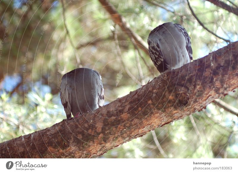 headless Colour photo Exterior shot Day Animal portrait Tree Pigeon 2 Safety (feeling of) Fatigue Nature