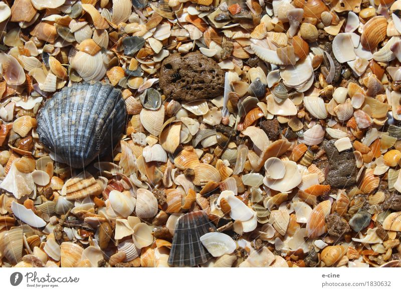 shell beach Harmonious Relaxation Swimming & Bathing Vacation & Travel Trip Far-off places Summer Summer vacation Sun Beach Ocean Nature Elements Sand Water