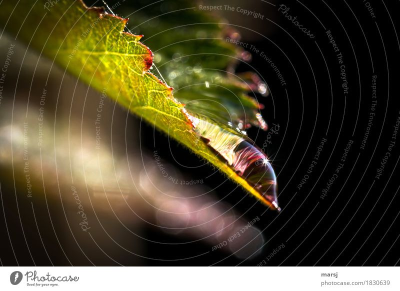 Nature Water Leaf Life Autumn Illuminate Glittering Contentment Elegant Drops of water Fantastic Hope Pure Well-being Refreshment Senses
