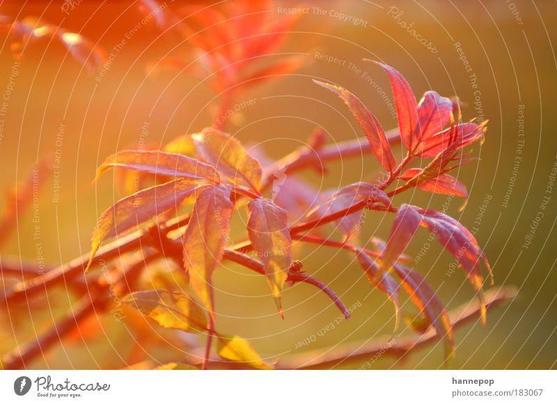 Nature Tree Plant Red Leaf Idyll Breathe