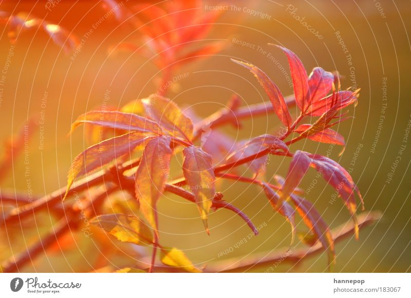red light Colour photo Exterior shot Close-up Twilight Sunlight Nature Plant Tree Leaf Breathe Red Idyll
