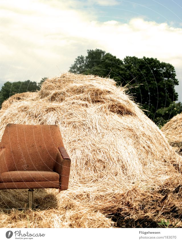 Plant Meadow Dark Environment Work and employment Field Dangerous Empty Sofa Brave Stupid Armchair Wheat Straw Arrogant