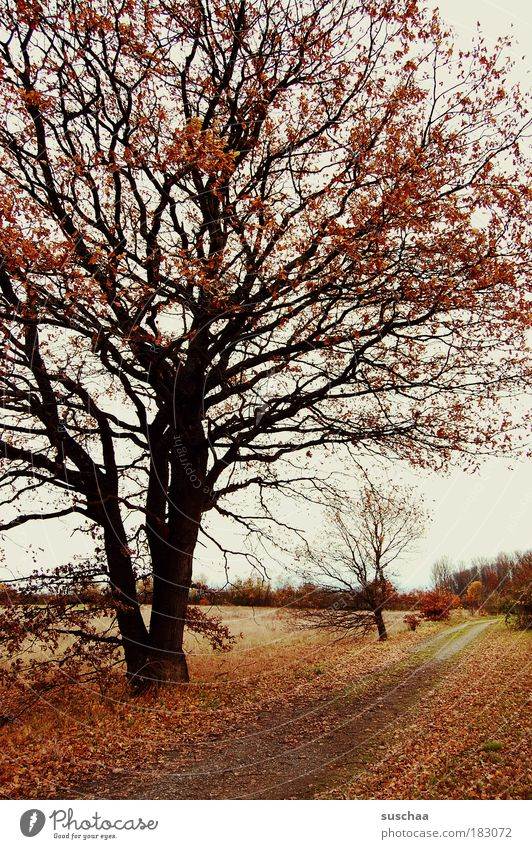 Nature Tree Plant Leaf Forest Dark Relaxation Autumn Wood Lanes & trails Landscape Field Wind Weather Environment Earth
