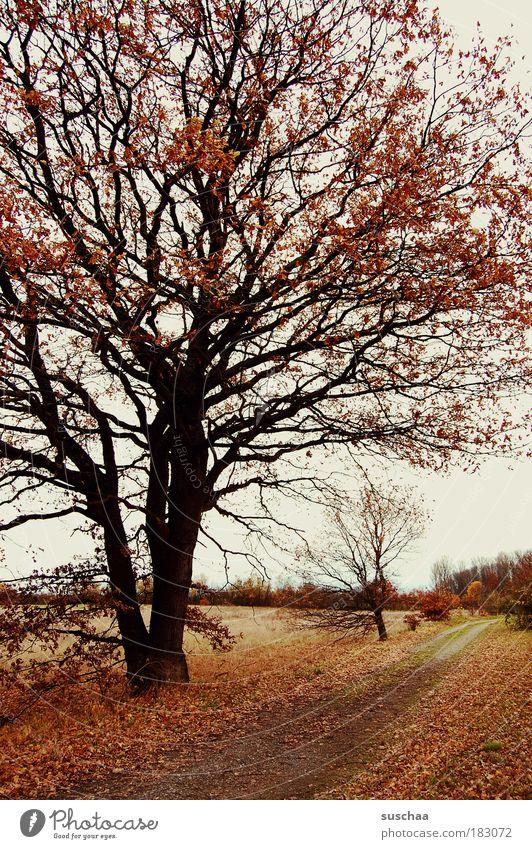 straight ahead .. Colour photo Subdued colour Exterior shot Deserted Evening Twilight Environment Nature Landscape Plant Earth Autumn Climate Climate change