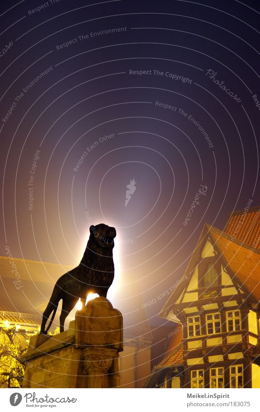 City Animal Power Cat Art Success Esthetic Places Authentic Protection Night sky Statue Wild animal Monument Historic Sculpture