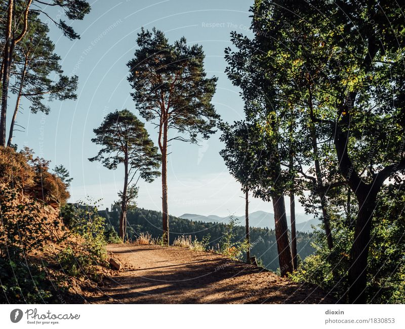 way there Vacation & Travel Tourism Trip Mountain Hiking Environment Nature Landscape Plant Tree Forest Palatinate forest Highlands Lanes & trails Footpath