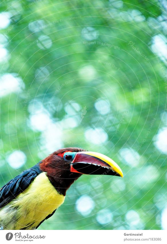 Green Red Summer Animal Yellow Brown Bird Environment Feather Animal face Wing Zoo Wild animal Exotic Beak Lens flare