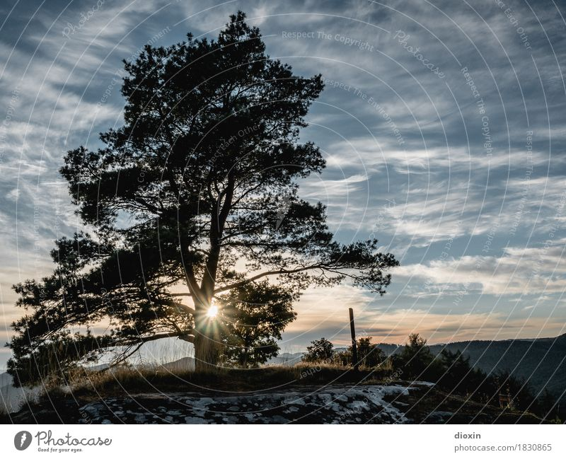 Sky Nature Plant Sun Tree Landscape Clouds Calm Far-off places Mountain Environment Natural Freedom Illuminate Contentment Trip