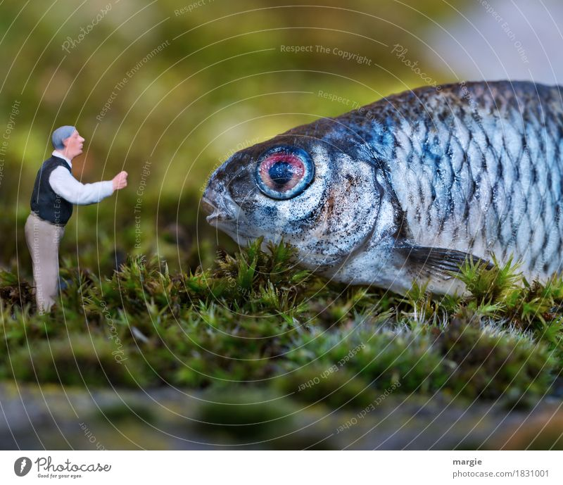 Miniwelten - Address Human being Masculine Man Adults 1 Animal Farm animal Wild animal Fish Animal face Scales To talk Blue Green Love of animals Figure
