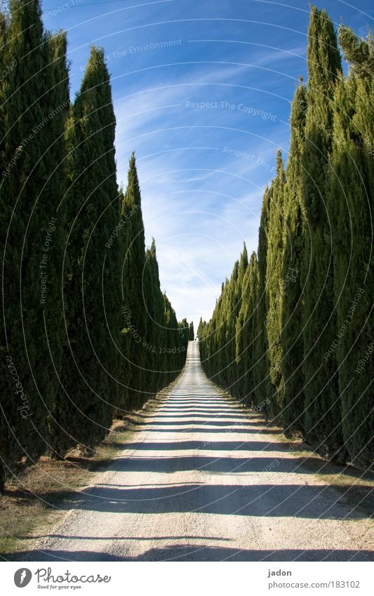 The way is the goal Colour photo Exterior shot Deserted Light Shadow Central perspective Elegant Living or residing Avenue Plant Sky Tree Foliage plant Cypress