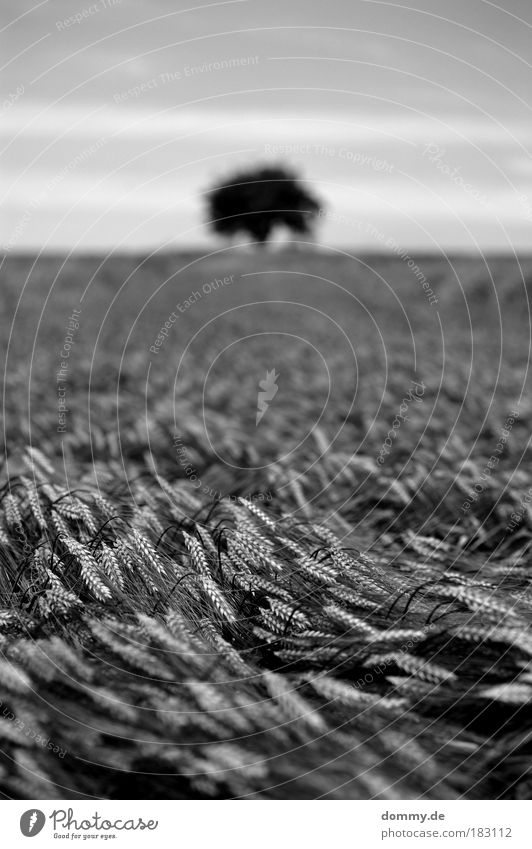 grain Black & white photo Exterior shot Deserted Copy Space top Day Light Shadow Contrast Silhouette Deep depth of field Worm's-eye view Nature Landscape Plant