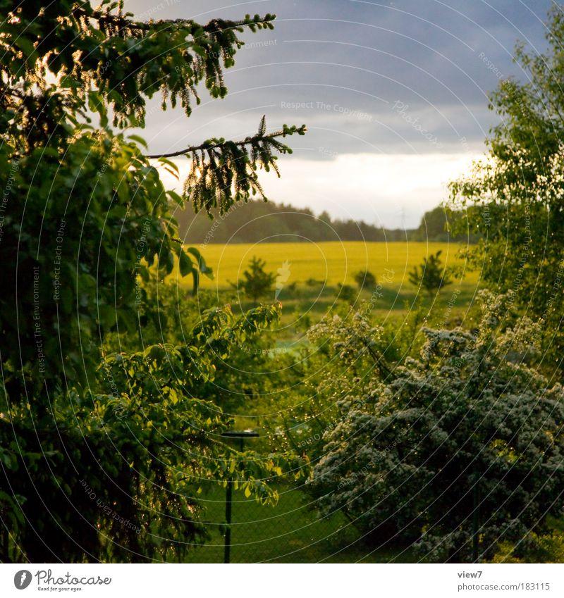 Nature Sky Tree Sun Green Plant Forest Relaxation Meadow Park Rain Landscape Weather Environment Horizon Bushes