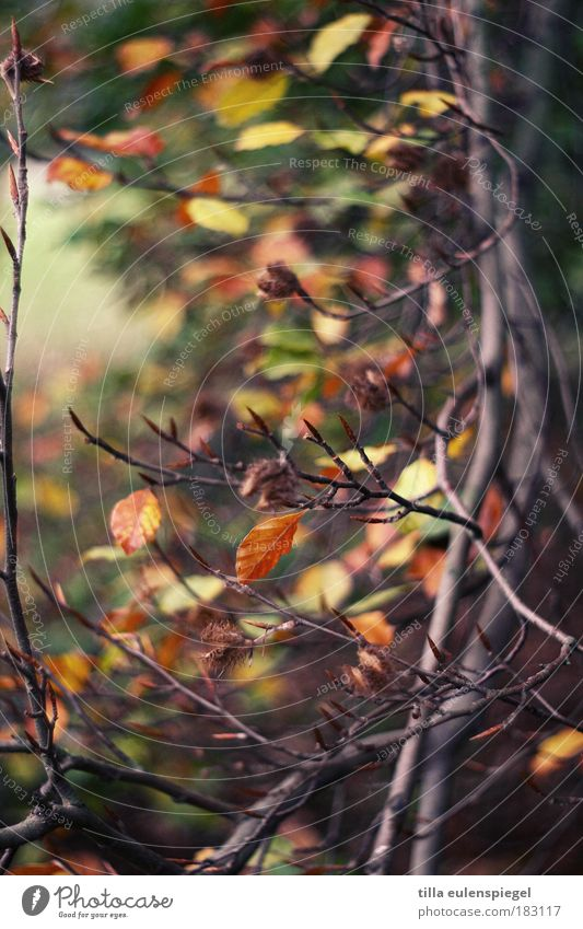 Nature Beautiful Old Tree Leaf Colour Relaxation Autumn Park Environment Leisure and hobbies Transience Natural Faded Twigs and branches
