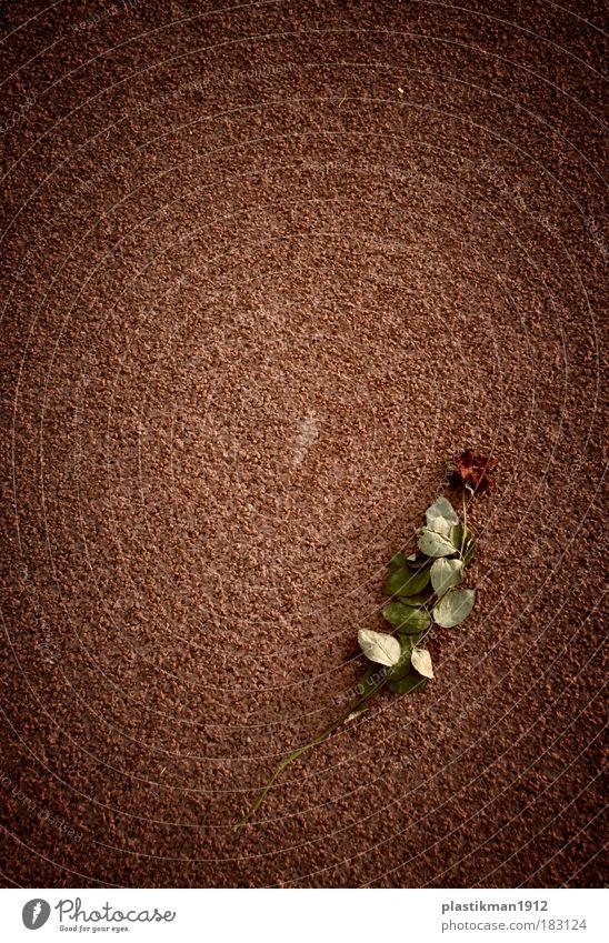 forgotten love Flower Love Rose