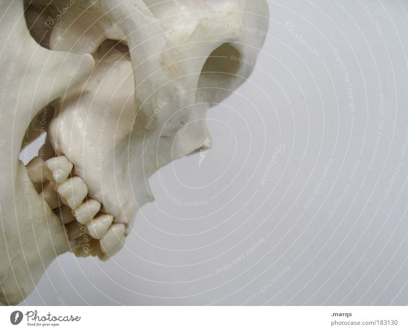 Old White Beautiful Death Head Masculine Health care Grief Illness Pain Force War Concern Disgust Hallowe'en Hideous
