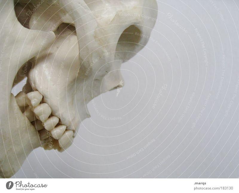 Old White Beautiful Death Head Masculine Health care Grief Illness Pain Force War Concern Disgust Hallowe'en Hideous