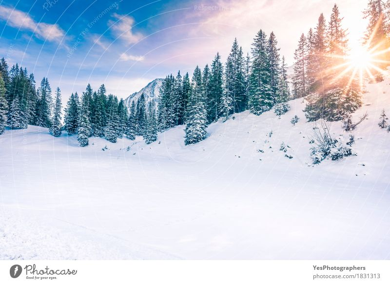 Winter sunshine in the forest Vacation & Travel Christmas & Advent Green White Sun Tree Joy Forest Mountain Cold Emotions Snow Horizon Copy Space Weather