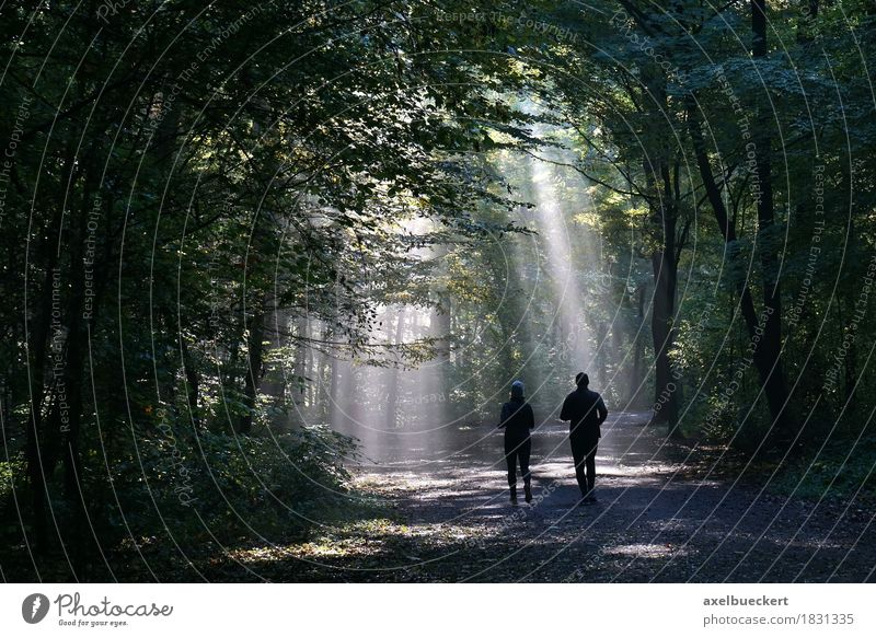 Jogger in the misty forest Lifestyle Fitness Leisure and hobbies Sports Jogging Human being Woman Adults Man Couple 2 Nature Autumn Weather Fog Forest Walking