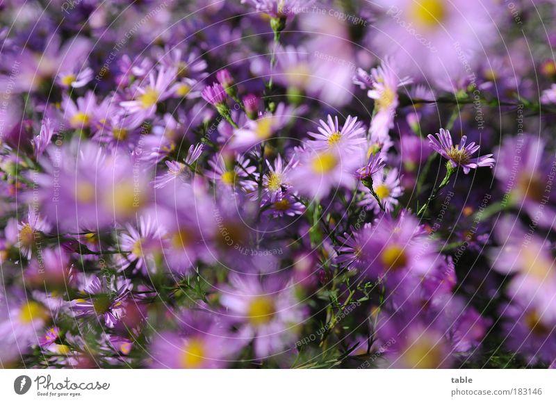Nature Beautiful Flower Green Plant Leaf Yellow Autumn Blossom Park Pink Esthetic Growth Bushes Violet Uniqueness