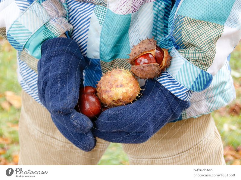 chestnut gatherer Child Boy (child) 3 - 8 years Infancy Jacket Gloves Touch Discover Leisure and hobbies Joy Chestnut tree Accumulate Autumn chestnut peel