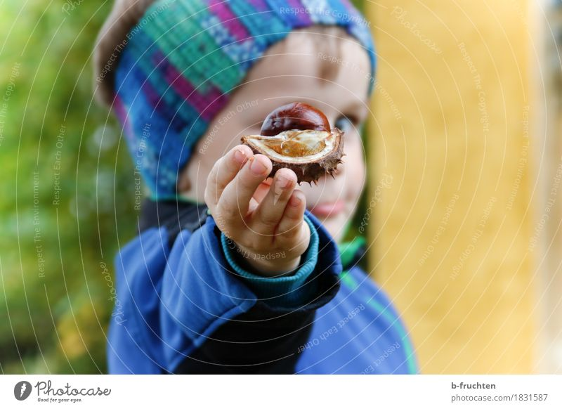 autumn greeting Boy (child) 1 Human being 3 - 8 years Child Infancy Autumn Jacket Discover Blue chestnut peel Chestnut Hand Fingers Indicate Edible nut Head