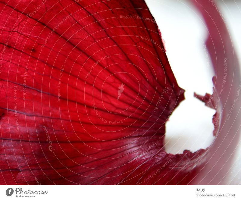 Nature White Red Nutrition Macro (Extreme close-up) Small Food Fresh Esthetic Growth Lie Transience Uniqueness Natural Exceptional Vegetable