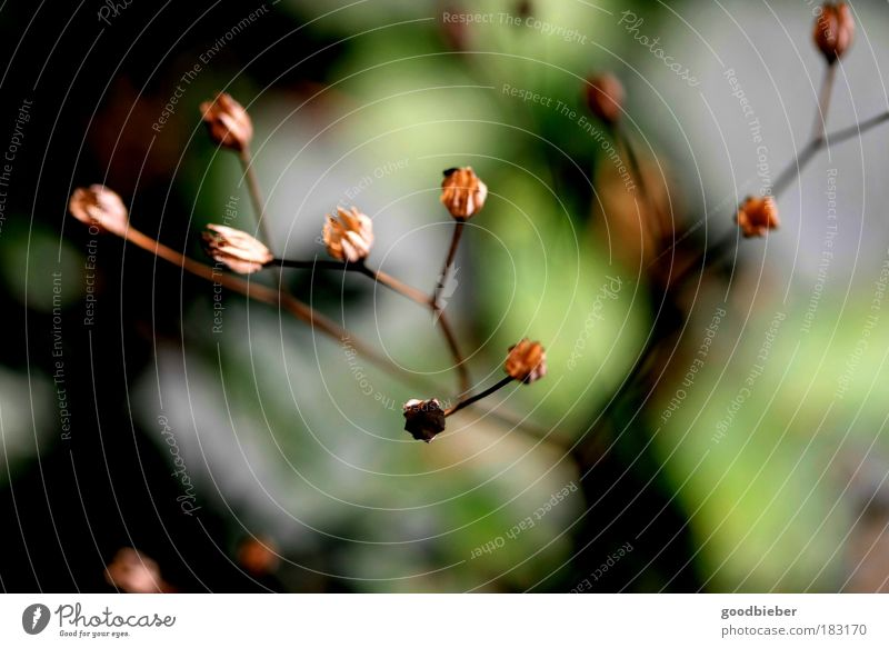Nature Green Plant Warmth Autumn Blossom Brown Power Elegant Growth Esthetic Point Soft Near Bud Deserted