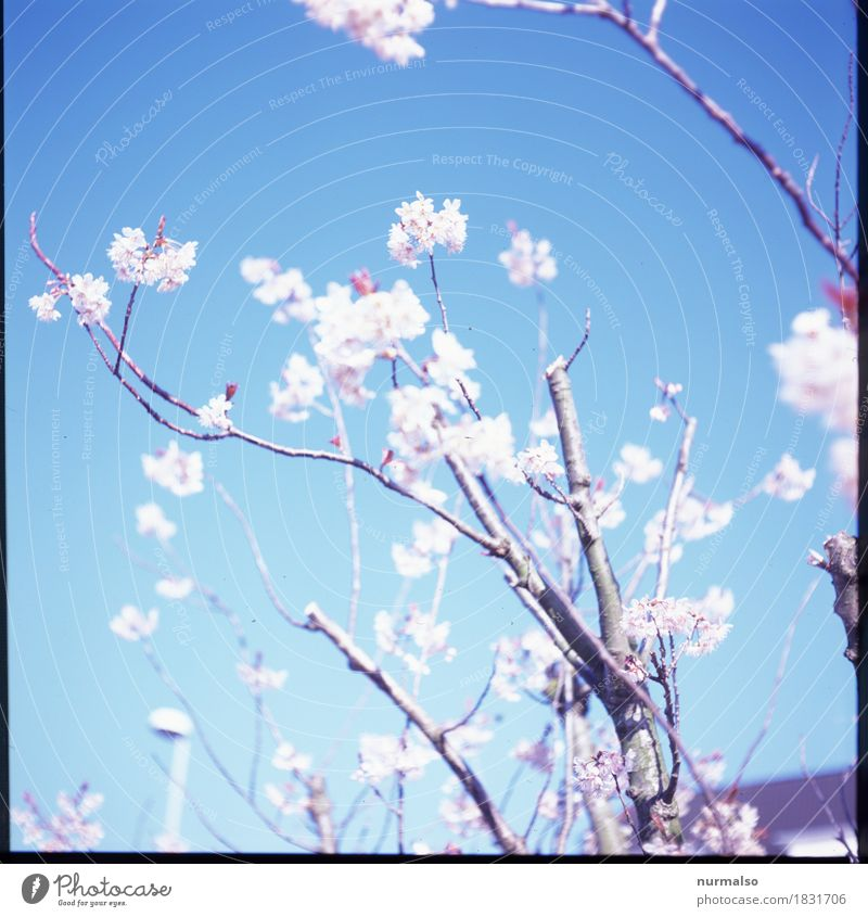 spring breeze Style Joy Garden Art Nature Plant Animal Sky Cloudless sky Spring Tree Blossom Blossoming Illuminate Growth Esthetic Exceptional Fantastic