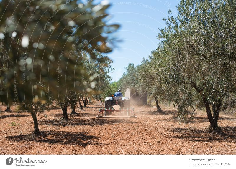 Tractor and olive trees. Vegetable Work and employment Profession Industry Machinery Nature Landscape Plant Tree Grass Vehicle Natural Green oil agriculture