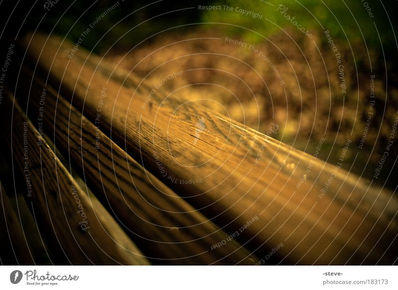 Woody Colour photo Exterior shot Close-up Detail Twilight Shallow depth of field Dark Brown Bench Park bench Leaf Autumn