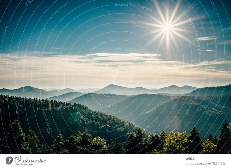 Sky Nature Plant Sun Landscape Clouds Far-off places Forest Mountain Horizon Free Fantastic Beautiful weather Friendliness Hill Infinity