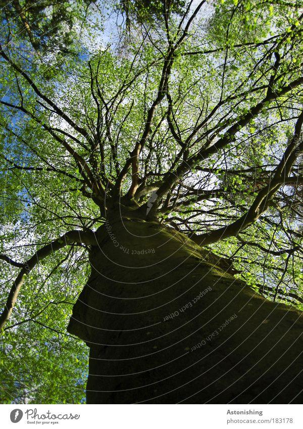 Nature Tree Green Plant Summer Leaf Black Air Brown Bright Environment Tall Growth Branch Upward Tree trunk