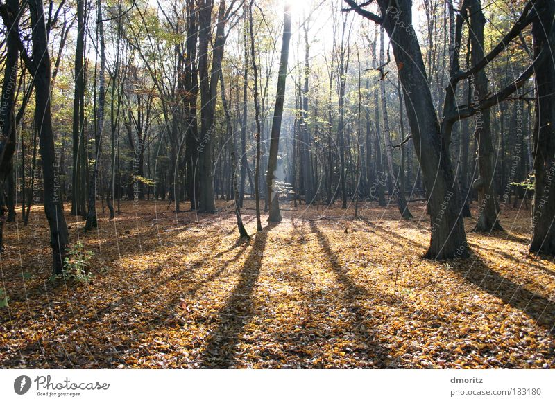 Nature Tree Sun Green Plant Yellow Forest Life Relaxation Autumn Light Movement Contentment Moody Brown Going