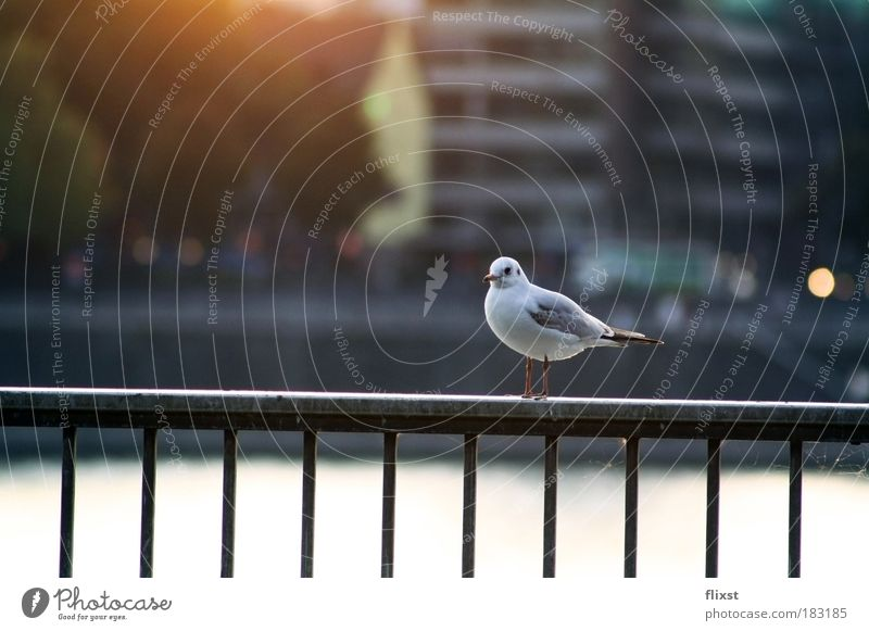 Calm Loneliness Autumn Serene Beautiful weather Pigeon Animal