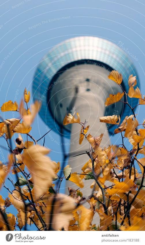 Sky Nature Blue Tree Plant Leaf Yellow Autumn Landscape Gray Germany Gold Large Tourism Tower Might